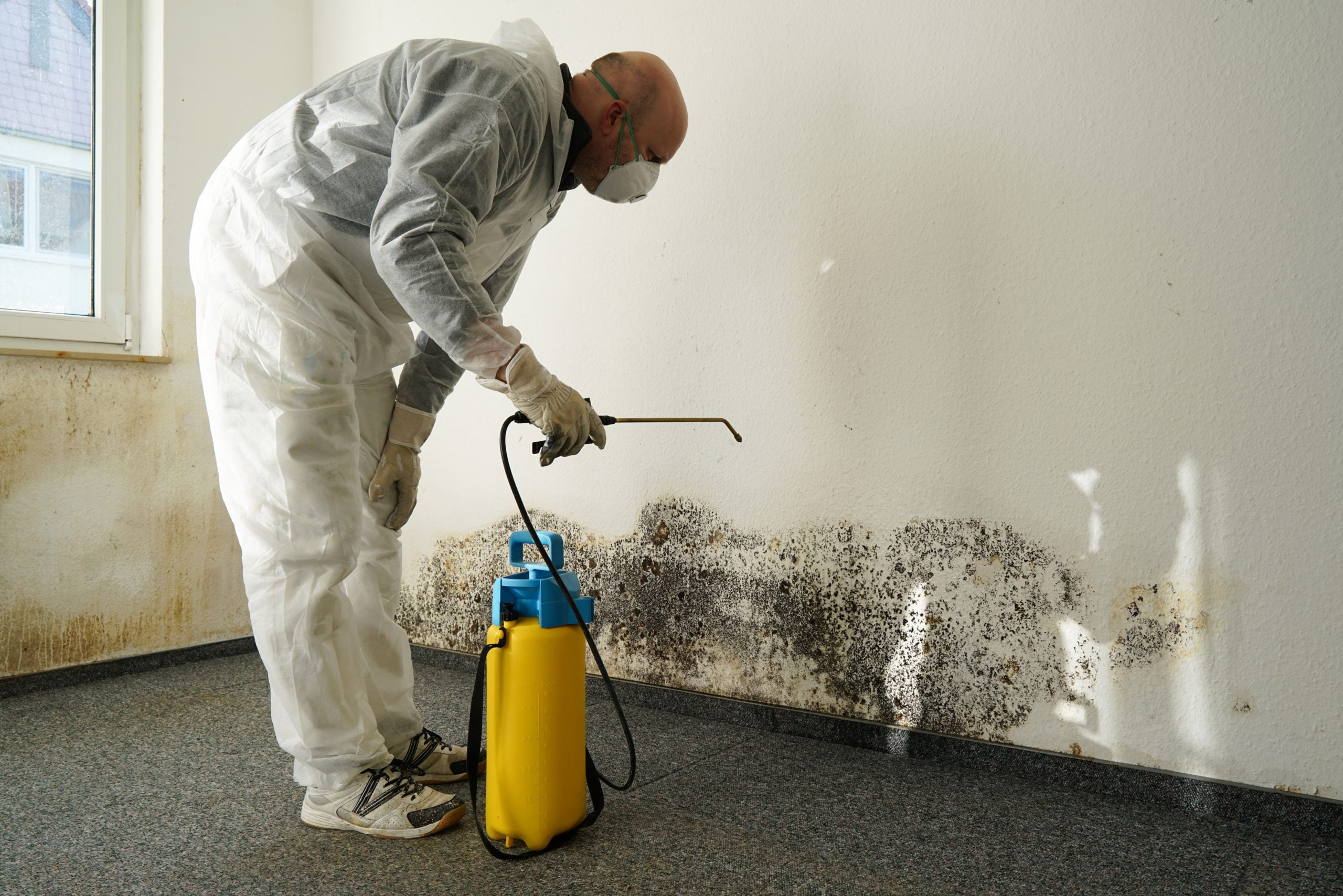 8 Ways to Eliminate Mold in Your Home 1